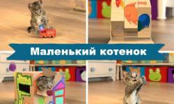 Маленький Котенок – прояви заботу о питомце