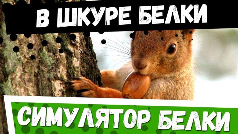Симулятор Белки