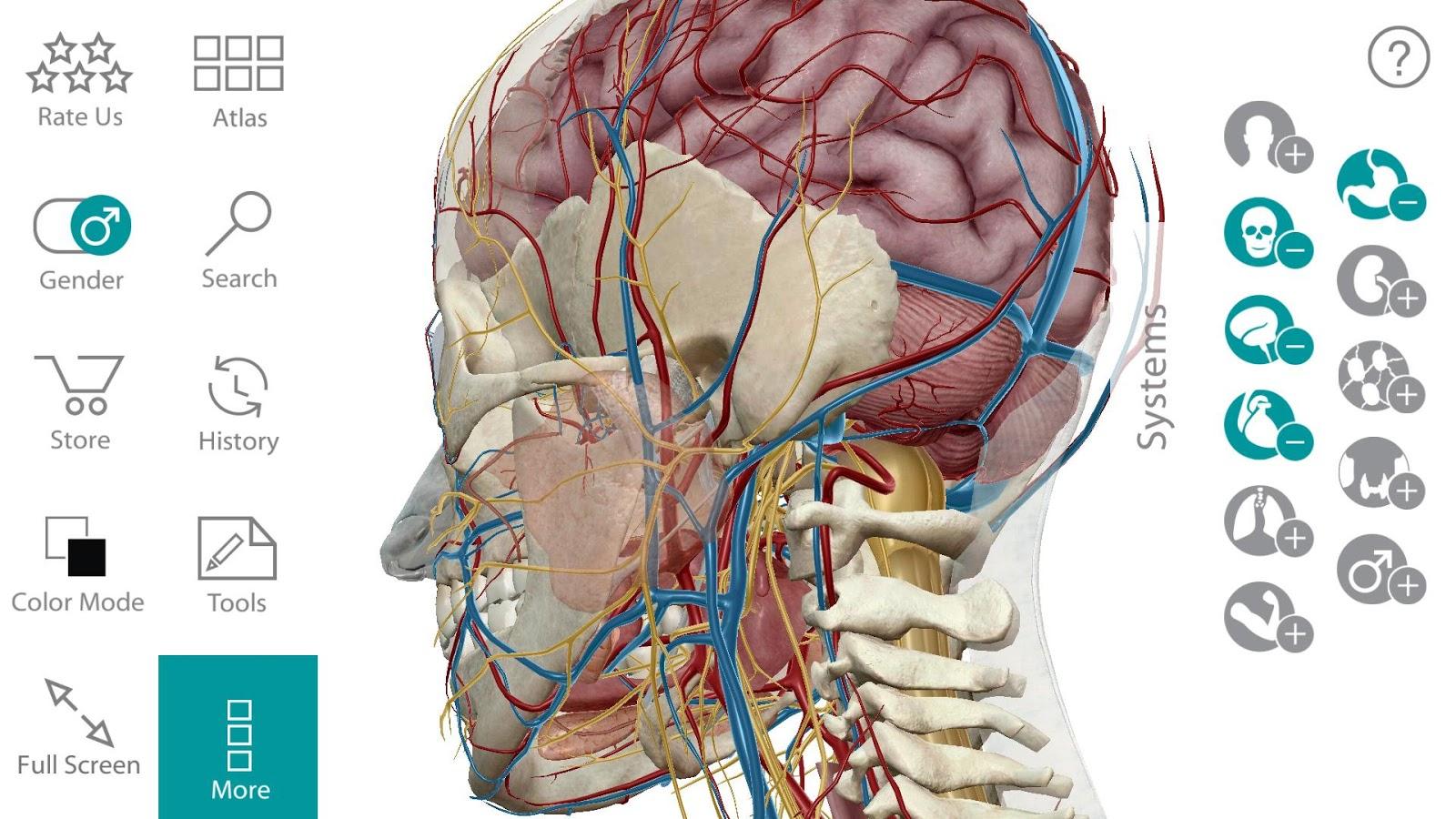human anatomy atlas скачать бесплатно